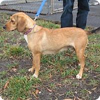Adopt A Pet :: Maddelein - KANNAPOLIS, NC