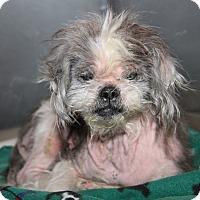 Adopt A Pet :: Simon - Marietta, OH