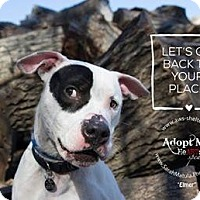 Adopt A Pet :: Elmer - New Milford, CT
