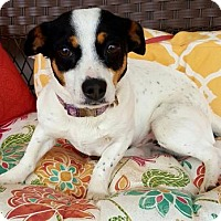 Adopt A Pet :: Princess - Scottsboro, AL