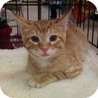 Adopt A Pet :: Binky - Modesto, CA
