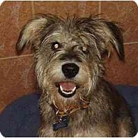 Adopt A Pet :: Scruffy - Miami, FL
