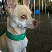 Adopt A Pet :: Peppy Le' Pew - Woodland, CA