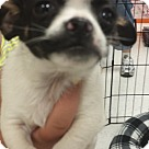 Adopt A Pet :: Number Six