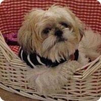 Adopt A Pet :: Dozer - Acushnet, MA