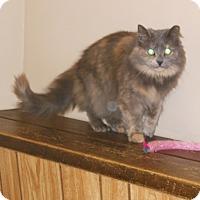 Adopt A Pet :: Tiki - Utica, MI
