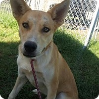 Adopt A Pet :: Shayne in CT - East Hartford, CT