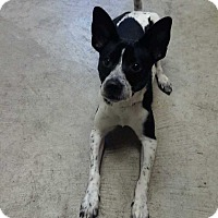Adopt A Pet :: Oreo - Nashville, TN