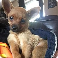 Adopt A Pet :: MINDY - Rancho Cucamonga, CA