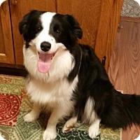 Adopt A Pet :: Panda - Midwest (WI, IL, MN), WI