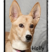Adopt A Pet :: Holly - Warren, PA