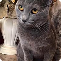 Adopt A Pet :: Fifi - Columbia, SC
