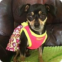 Adopt A Pet :: Jamie - Las Vegas, NV