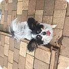 Adopt A Pet :: Dubbie