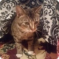 Adopt A Pet :: Parsnip (ETAA) - Harrisonburg, VA