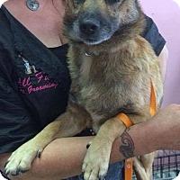 Adopt A Pet :: Ryder - Manassas, VA