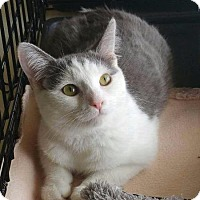 Adopt A Pet :: Pretty Girl - Wauconda, IL