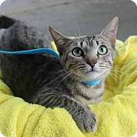 Adopt A Pet :: Tabitha - Ocean Springs, MS