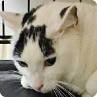 Adopt A Pet :: Meso - Medford, MA