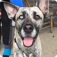 Adopt A Pet :: Frankie - Huntley, IL