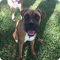 Adopt A Pet :: JoJo - Austin, TX