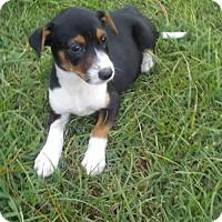 Adopt A Pet :: Parker - Willingboro, NJ