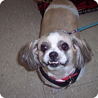 Adopt A Pet :: Petey - Olivet, MI