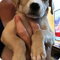 Adopt A Pet :: Roonie - Houston, TX