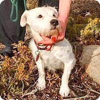 Adopt A Pet :: Lulu - Evergreen, CO