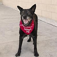 Adopt A Pet :: Buddy - Houston, TX