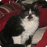 Adopt A Pet :: Benjamin - Edmond, OK