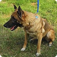 Adopt A Pet :: BAILEY - SAN ANTONIO, TX