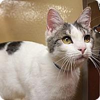 Adopt A Pet :: Cooper - Santa Monica, CA