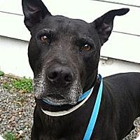 Adopt A Pet :: Cade - Clarksburg, MD