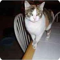 Adopt A Pet :: Mau Mau - Hamburg, NY