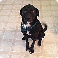 Adopt A Pet :: Buddy - Saskatoon, SK