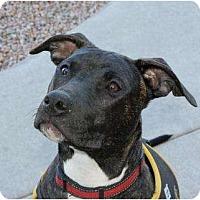 Adopt A Pet :: Bentley - Mesa, AZ