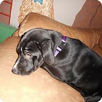 Adopt A Pet :: Roscoe - Meridian, ID