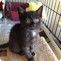 Adopt A Pet :: Louise - Island Park, NY