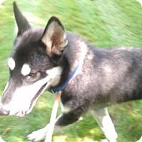 Adopt A Pet :: Jasper - 1 year cutie - Augusta County, VA