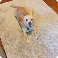 Adopt A Pet :: Bam Bam - Windermere, FL