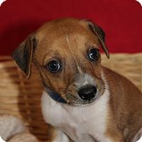 Adopt A Pet :: Boris - Waldorf, MD