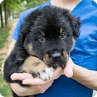 Adopt A Pet :: Dwight - Suwanee, GA
