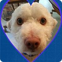 Adopt A Pet :: Adopted!!Moose - OH - Tulsa, OK