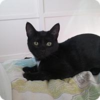 Adopt A Pet :: Soli - Sherman Oaks, CA