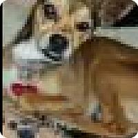 Adopt A Pet :: Tulip - Beverly Hills, CA