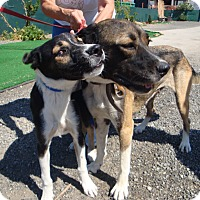 Adopt A Pet :: Lady and Amy - Toronto, ON