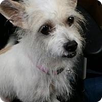 Adopt A Pet :: Lila - Las Vegas, NV