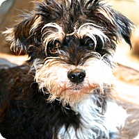 Adopt A Pet :: Everett - Woonsocket, RI