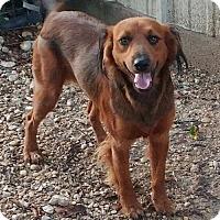 Adopt A Pet :: Cheech - Huntington Woods, MI